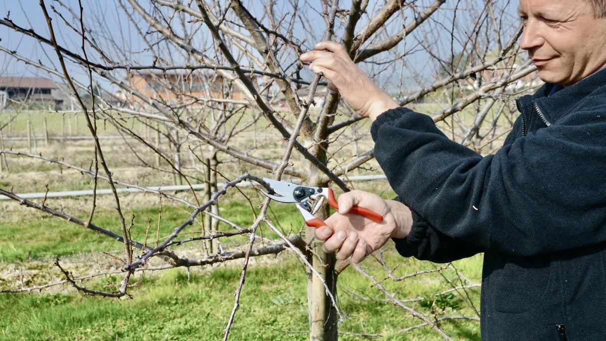FELCO 8 pruner shear